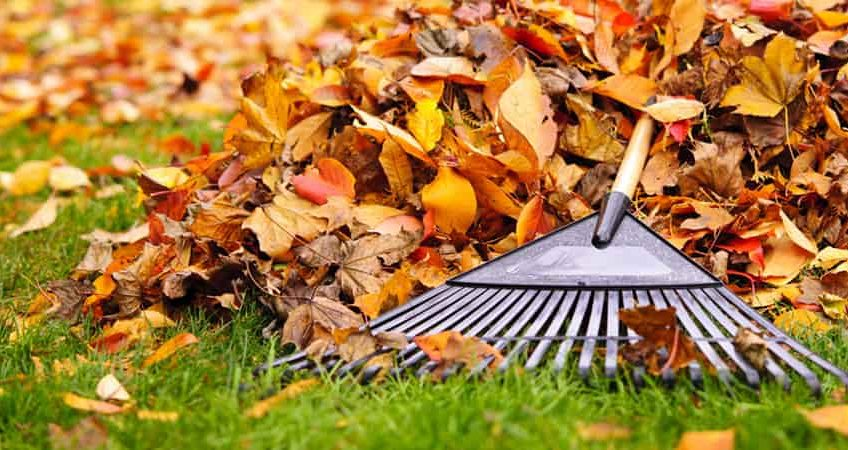 Prepare Garden for Autumn